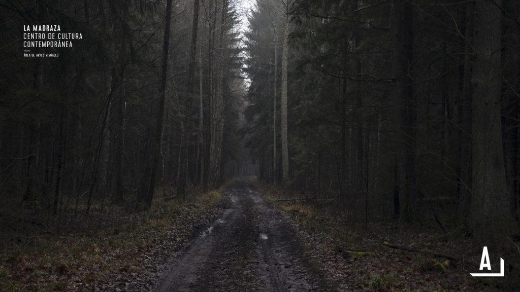 ultimo bosque-d
