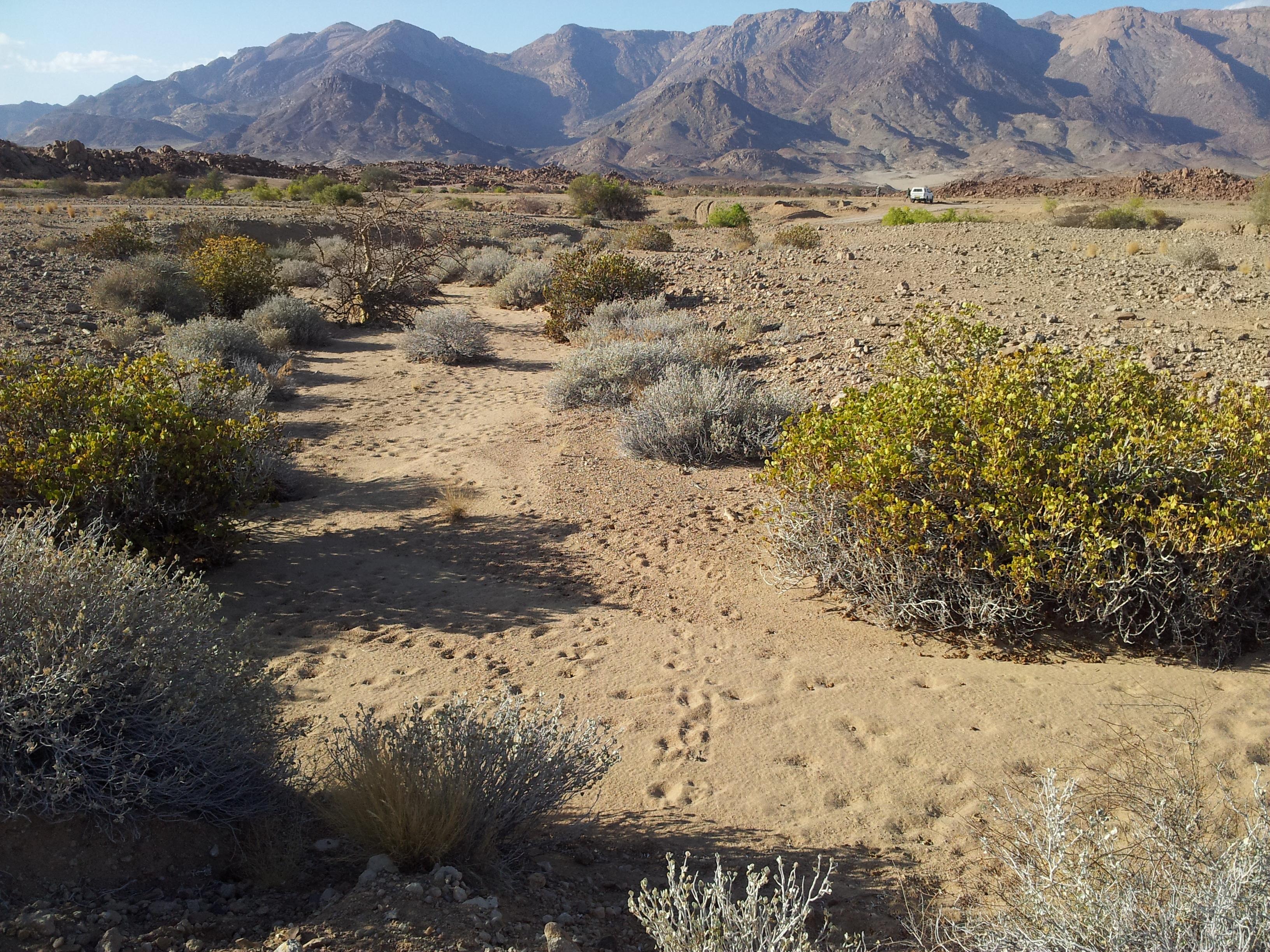 Afluente Rio Ugab, Namibia (Marcos Moleon)